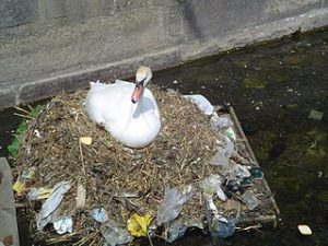 320px-Pollution_swan